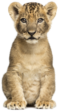 We now support the new Lion Cub program in TroopWebHostCS